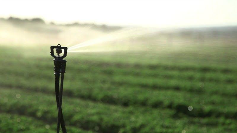 """Fenareg quer """"medidas imediatas"""" para compensar os agricultores pelos efeitos da seca"""