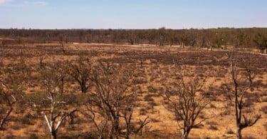 32,6% dos solos do país estão em situação de degradação