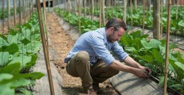 Yara - gama fertirrigação - Vida Rural