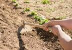 Agricultura pode ser terapia para a deficiência e exclusão social