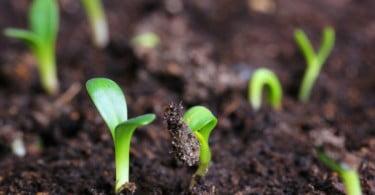 """SPEA diz que proposta de orçamento da UE """"coloca em causa o desenvolvimento sustentável da Europa"""""""
