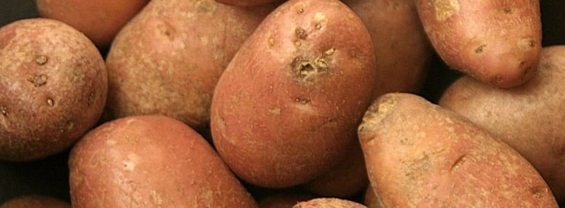 Governo vai apoiar produtores de batata com linha de crédito 3 M€