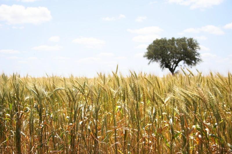 cereais - Vida Rural