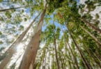 País vai ter empresa pública para gerir florestas