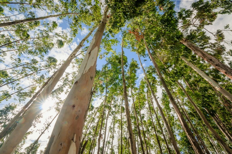 Infografia: conheça as regras para limpeza da floresta