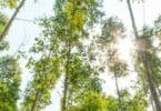 """Setor florestal alerta para """"cenário de pós-guerra"""" depois dos incêndios"""