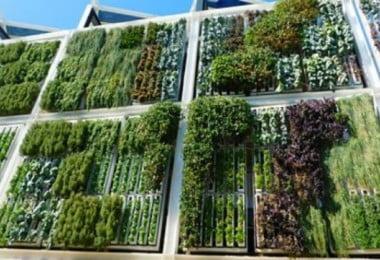 Carrefour instala horta vertical