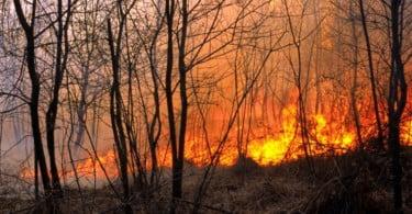 Governo disponibiliza 600 mil euros em apoios para agricultores afetados pelos fogos de Mação, Vila de Rei e Sertã
