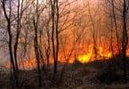 Castelo Branco já usa app que emite alertas de incêndios florestais à população