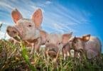 FPAS lança nova linha de produto do porco.pt