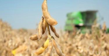 Brasil vai tornar-se no maior produtor mundial de soja