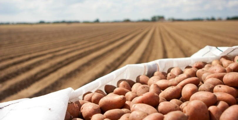 Batata nacional já pode ser exportada para o Qatar