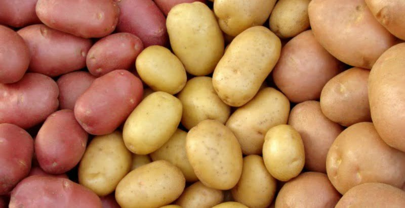 Produtores de batata já têm acesso a linha de crédito