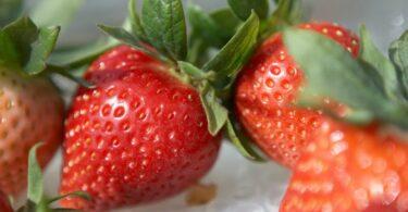 exportações pequenos frutos