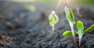 Inovação agrícola recebe 20 milhões de investimento público