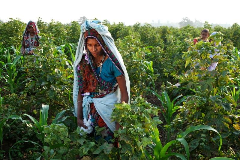 o que é que a agricultura tem a ver com a moda? mais do que imagina