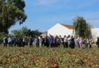 Nova tecnologia permite otimizar em 10% produção de tomate