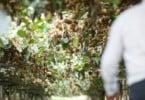 Portugal já soma 2800 hectares de produção de kiwi