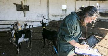 Pequenos Ruminantes - veterinária Ana Simões - Vida Rural  (9)