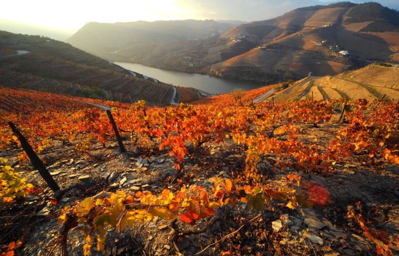 Logística da Sogrape Vinhos distinguida