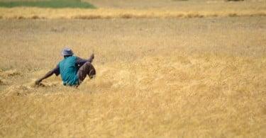 Ataques a agricultores na África do Sul aumentaram 60% nos últimos dez anos