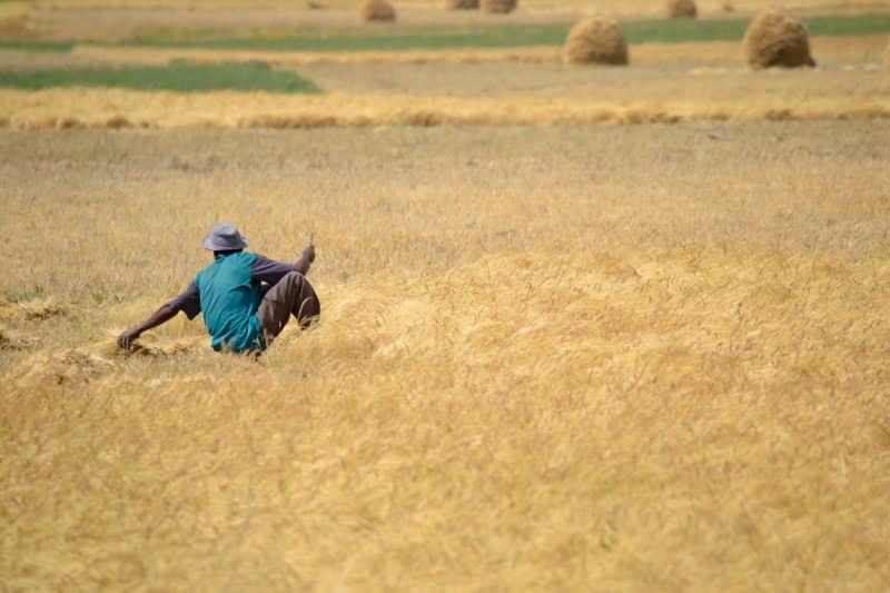 Angola quer crescimento de 5,9% na agricultura