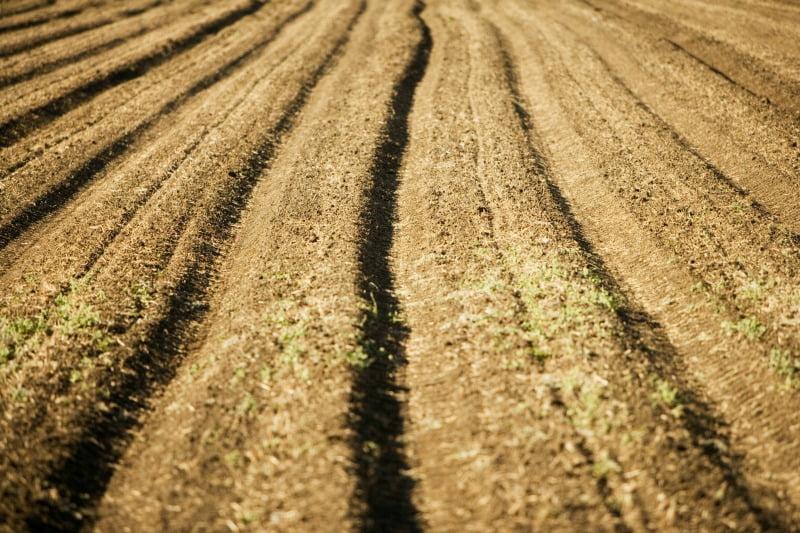 Cabo Verde prepara a agricultura para as alterações climáticas