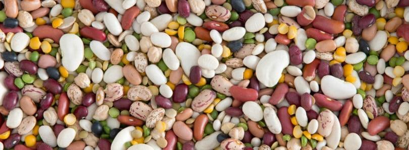 Dicas nutricionais para produtores de leguminosas