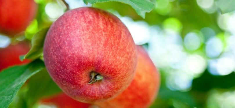 Produtores nacionais já podem exportar pera e maçã para a Indonésia