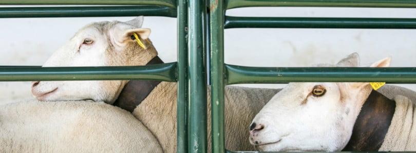 Quando a gestão na pecuária também passa pela ADS
