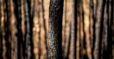 Ministério da Agricultura atribui novas ajudas a agricultores afetados pelos incêndios