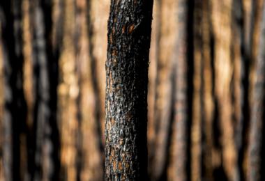 Governo tem 1,9 M€ para contratar 150 sapadores florestais