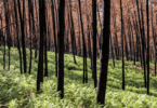 Governo anuncia novas medidas de apoio a agricultores afetados pelos incêndios