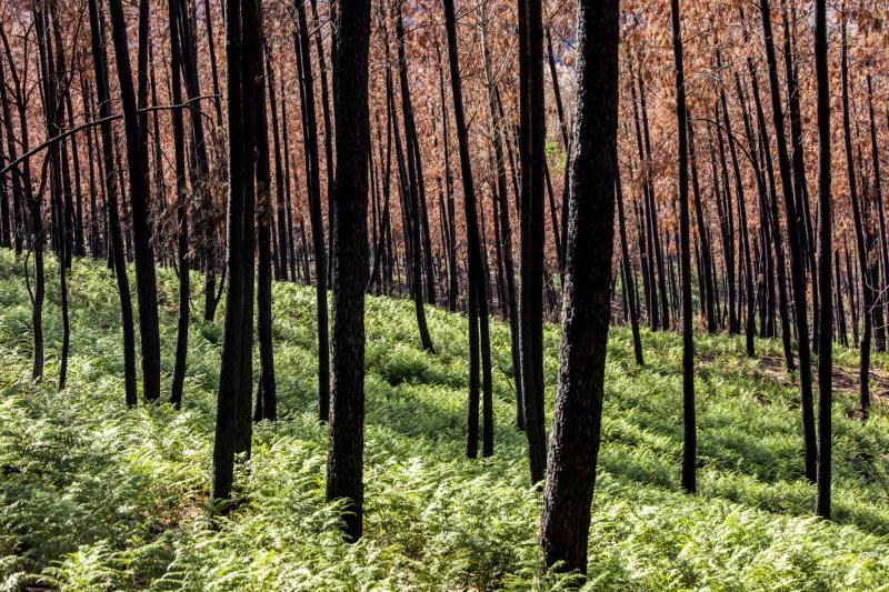 Laboratório para gestão da floresta e dos fogos está à procura de investigadores e gestores de projeto