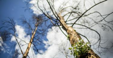 Governo quer contratar 1000 sapadores florestais até 2019