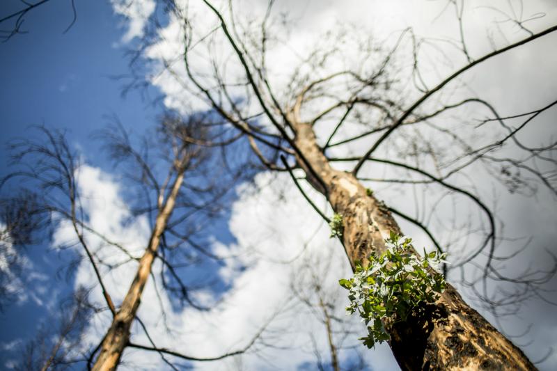 Floresta: uma reforma falhada?