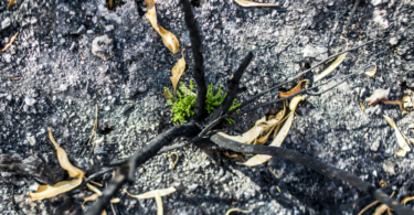 Governo tem 4,5 M€ para estabilização do território afetado pelos incêndios de Monchique