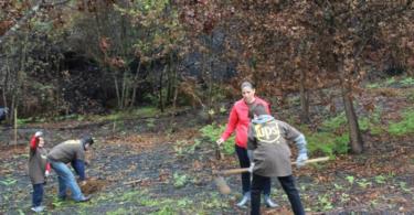 Voluntários gerem área florestal ardida em 2015