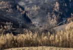 Apoios a agricultores atingidos pelos incêndios garantidos pelo Governo