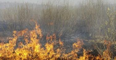 Comissária Europeia para o Desenvolvimento Rural visita zonas afetadas pelos incêndios em Portugal
