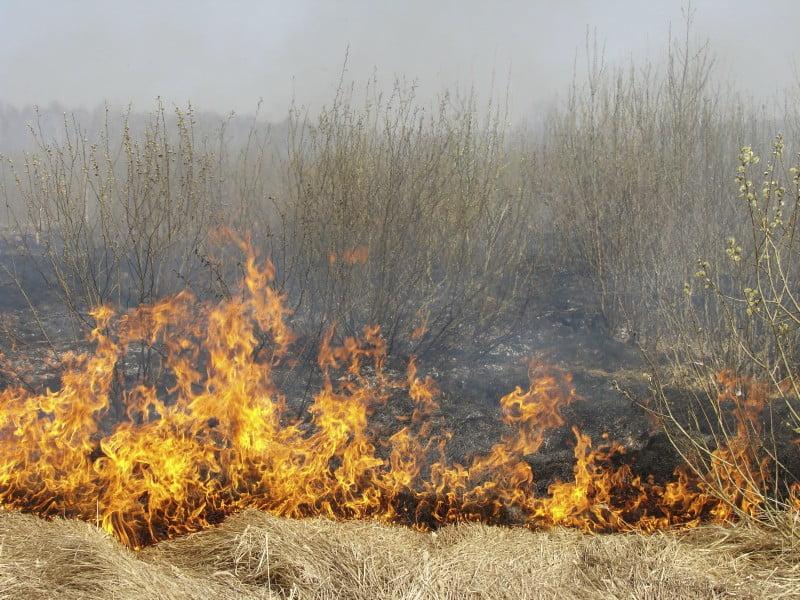 Ministro da Agricultura quer punir incendiários com 'mão pesada'