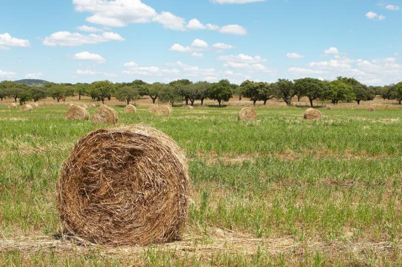 ADP lança fertilizante para pastagens à base de fósforo