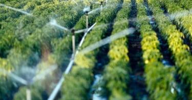 CNA considera apoios aos agricultores afetados pela seca 'insuficientes'