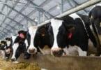 Produtores de leite nacionais dizem estar a beneficiar com crise da manteiga