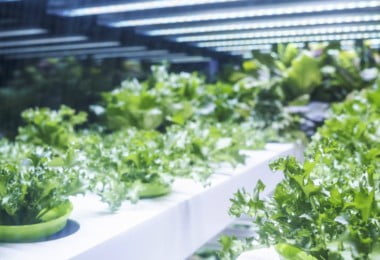 Potencialidades da LED para a produção de plantas
