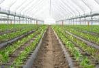 Estados-membros aprovam novas regras para a agricultura biológica