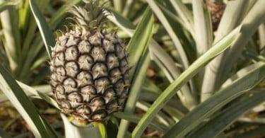 Açores vão direcionar verbas para reforçar capacidade estrutural da agricultura