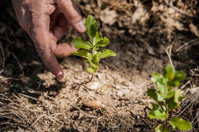 Voluntários da Corticeira Amorim vão plantar 2500 sobreiros