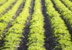 Vitacress investe 4 M€ no aumento da capacidade de produção