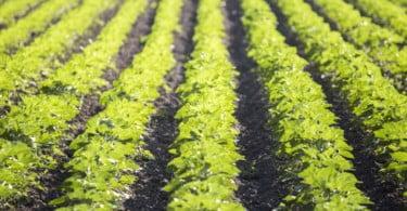 Os agricultores estão cada vez mais 'verdes'… e não é de inveja!